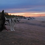 I often wonder if animals can appreciate a beautiful sunset the same way we do. I'd like to think that they can.