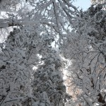 Among the snowy trees