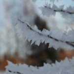 Snow crystals - February 2013