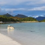 A beach in Arctic Norway.