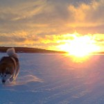 A magnificent sunset in Lapland.