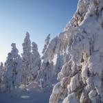 Midwinter in Lapland.