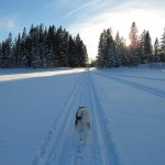 Skijoring with Tuisku on a beautiful day in March 2011.