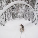 Skijoring in winter wonderland - January 2012.