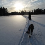 Afternoon skijoring in March 2011.