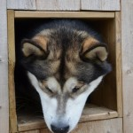 In his dog house.