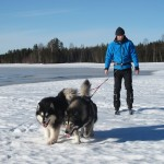 Late spring skijoring - without poles.