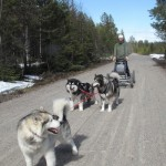 Carting with Leia and Tuisku, spring 2012.