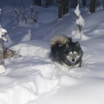 Thunder and Tuisku in deep snow - 2005.