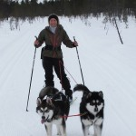 Puppy Titan's first skijoring session with Gem in Lapland.
