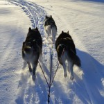 Zoomin' down the trail with Thunder and Tuisku in January 2015..