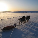 Skijoring in Finnish Lapland with Thunder and Leia.