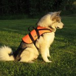 Tuisku trying out his new lifevest.