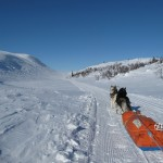 On our way home, skijoring on groomed trails.