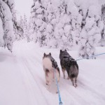 Tuisku and Thunder during a midwinter excursion.