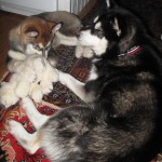 Gemma sharing her toys with puppy Titan.