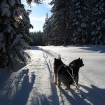 Leia and Thunder on our private trail in Sweden.
