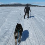 Skijoring on the Torne River in April 2011.