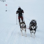 Fredrik covers up his face due to strong winds. Our Malamutes don't seem to notice the weather.