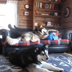 Cabin life in Lapland - Gem and Titan hangin' out with Fredrik.