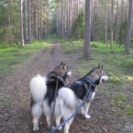 Forest walk with fuzzy butts.