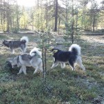 Young dogs in the forest play area.