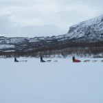 We met a dog sled caravan on our way down to Abisko.