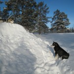 Tuisku and Gem and a big pile of snow in 2008.