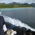 The dogs enjoyed the speed boat trip to the islet off Senja's coast.