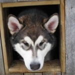 Titan in his dog house.