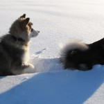 Puppies in deep snow.