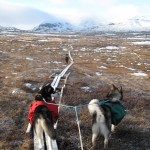 The King's Trail is in the remote wilderness of Swedish Lapland.