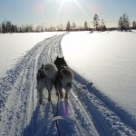 Sledding in the afternoon sun - great memories from Lapland.