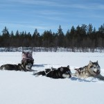 Titan, Gem and Tuisku in Lapland.
