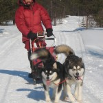 Johann sledding with Jeti and Bruno (Bear Pak Blackfoot Bruno).