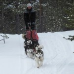 Fredrik sledding with a 5-dog team, April 2012.