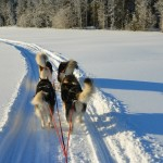 March mushing - 2013