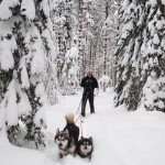 We were able to ski on top of the snow in some places but the dogs had to work hard to break trail.
