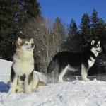 A beautiful day at Mountain Home Kennels in Twisp, WA, U.S.A.