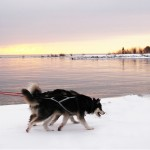 Scenic skijoring along the shore.
