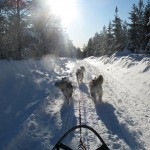 Hilary and Lyra showing they are naturals in harness during their first run in front of the sled.