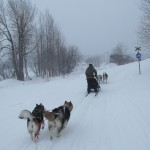 Trip in Vålådalen in Jämtland. The pups are following Aimee Campbell and her 2-dog Malamute team.