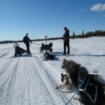 On a short trip in Jäkkälä with James and the Ayakulik Alaskan Malamutes.
