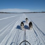 Sledding along the Arctic Trail in Finland with Tuisku in single lead - April 2012.
