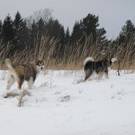 A visit to the beach for some fun on the frozen dunes.