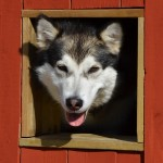 In her dog house - July 2013.