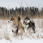 Pups in the reeds.