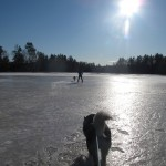 Skijoring on slippery ice.