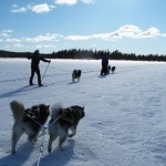 James with Xion and Oakley, Fredrik with Kiska and me behind, skijoring with the pups.