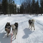 Hilary, Lyra and Tuisku on our way to Ullajärvi.